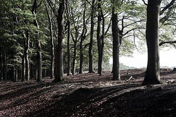 Bomen in de ochtendzon van DuFrank Images