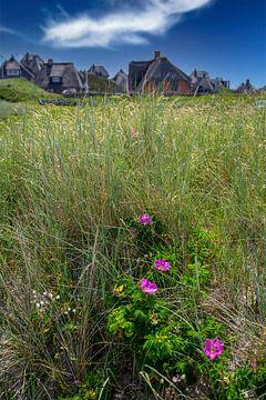 Sylt rozen met rieten huizen, Sylt van Gerwin Schadl