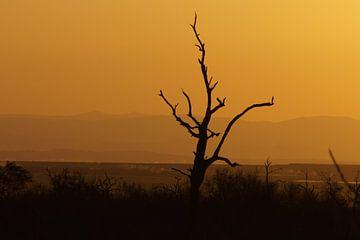 Vergezicht / View, Hlane, Swaziland, Zuid-Afrika von Maurits Bredius