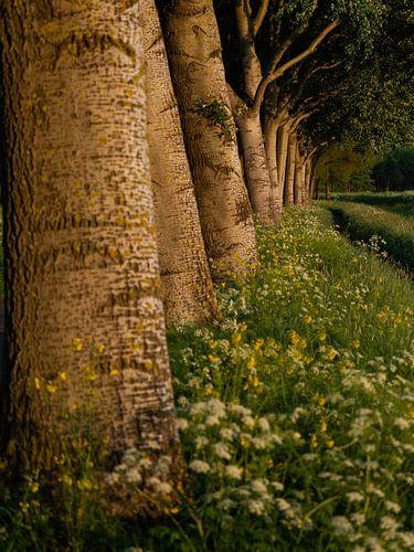 Bomenrij van Mattijs Diepraam