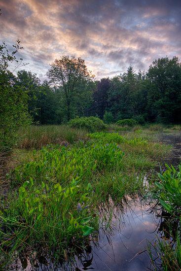 Ven in de bossen van Joep de Groot