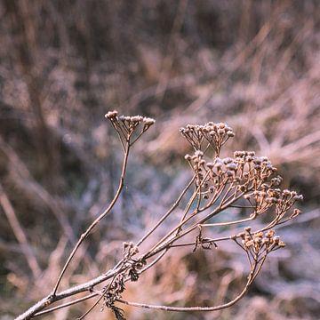 Tak droogbloemen in de winter van Idema Media