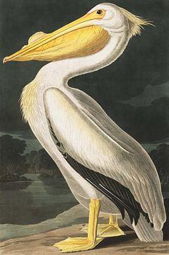 Nashornpelikan, John J. Audubon von Meesterlijcke Meesters