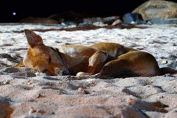 Slapende strand hond van Andrew Chang