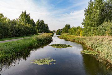 Utrecht-Maxima Park mit Lily Blätter von Jaap Mulder