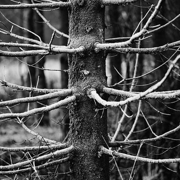 O, dennenboom, O dennenboom.. von Jeannette Kliebisch