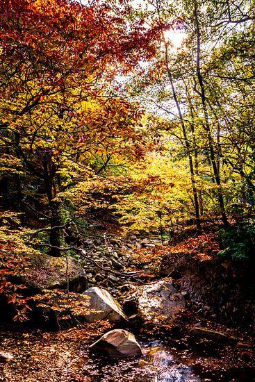 Rivier in het herfst bos
