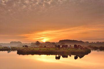 Koeien met een prachtige zonsopkomst von John Leeninga