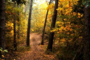 Herbstlicher Wald von Henk Elshout