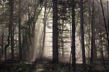 Wald am Morgen mit Nebel von Robin Jongerden