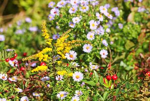 Blumen an einem heißen Sommertag