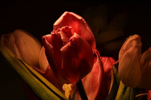 bright tulp