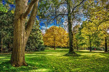 Herfst in het Rengerspark von Harrie Muis