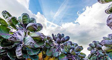 Luchtspruiten sur Maurice B Kloots      www.Fototrends.nl