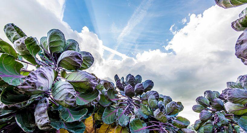 Luchtspruiten van Maurice B Kloots      www.Fototrends.nl