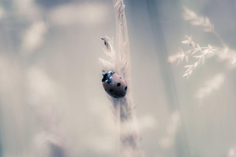 Lieveheersbeestje van Maja Ooms
