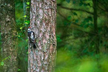 Grote bonte specht in de boom van Manon Verijdt