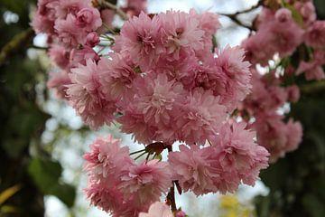 Roze bloesem van Nienke van den Brink