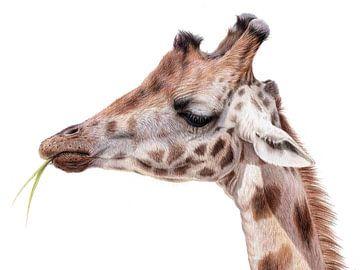 Giraf tekening Leontine van Vliet van Leontine van Vliet