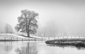 Eik in mist.  von Tony Ruiter