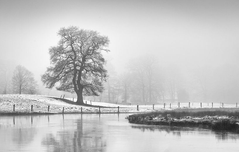 Eik in mist.  van Tony Ruiter