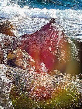 Leguaan rust op de rots van Renee Alexandra Serlier
