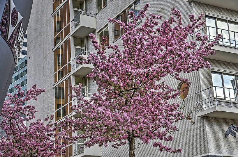 Dudok in de lente van Frans Blok