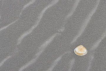 Muschel am Strand von Sander Groenendijk