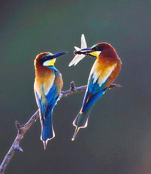 Paartje Bijeneter (Merops apiaster) met tegenlicht van Beschermingswerk voor aan uw muur