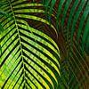 TROPICAL GREENERY LEAVES no10 van Pia Schneider thumbnail