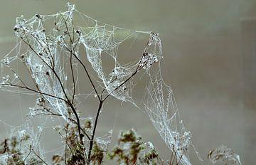 Planten in de ochtend mist met dauw op spinnenweb van Trinet Uzun