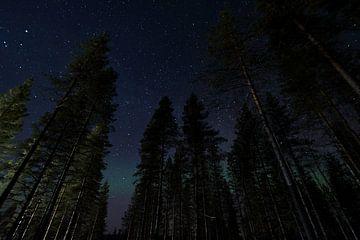 Noorderlicht van Leon Doorn
