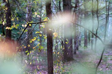 sfeer in het bos van Anne Hana
