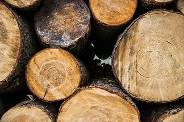 Boomstammen in het bos van Chantal Schutte