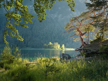 Sommerabend am Eibsee von Max Schiefele