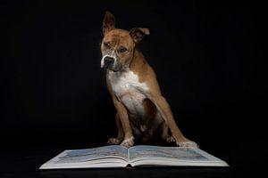 Hond met bril leest boek