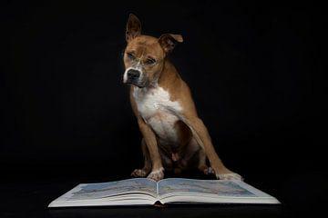 Hond met bril leest boek von R Alleman
