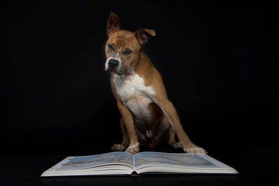 Hond met bril leest boek van R Alleman
