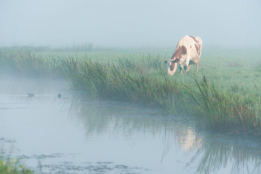 Koe in de mist van John Verbruggen