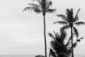 Palmbomen in zwart-wit van Suzanne Spijkers