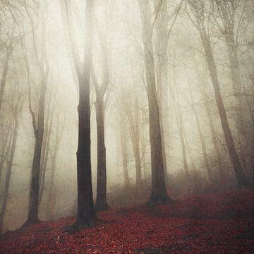 Wald im Nebel von Dirk Wüstenhagen