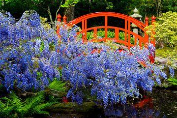 Japanse brug met blauwe regen van Ton van Buuren