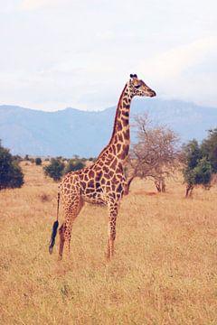 Giraf in Afrikaans landschap van Cinthia Mulders