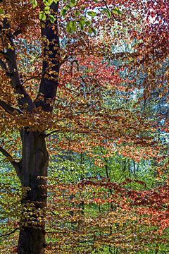 sprookjesachtige boom