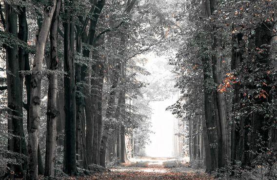 Winter in het bos van Jos Erkamp