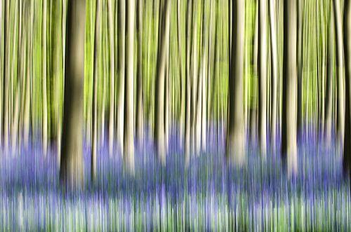 Bomen in beweging van