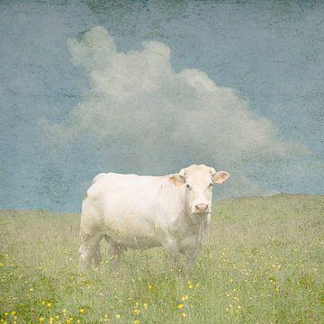 Französische Kuh auf der Wiese von Patrick Reinquin