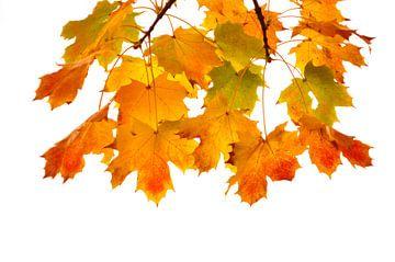 Gekleurde herfstbladeren van Corinne Welp
