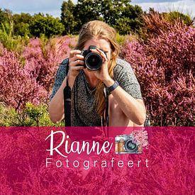 Rianne Fotografeert avatar