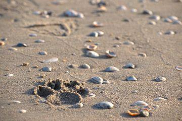 Beinabdruck Strand von Marvin Van Haasen